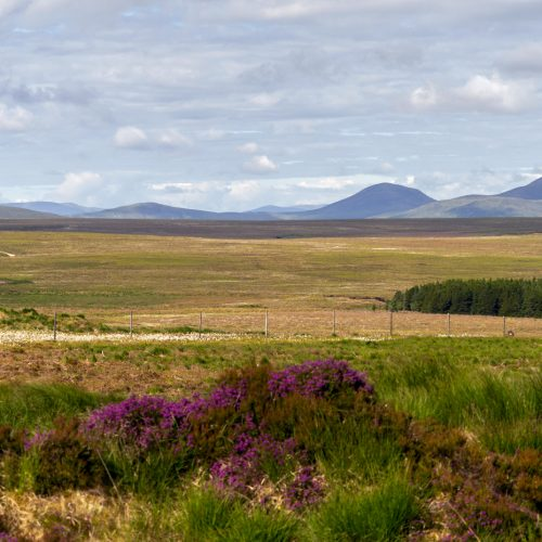 Track across The Flows from Forsinard to Sutherland, by Julie Catterall